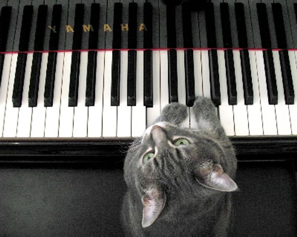 Special Interview - Nora, the Cat Pianist