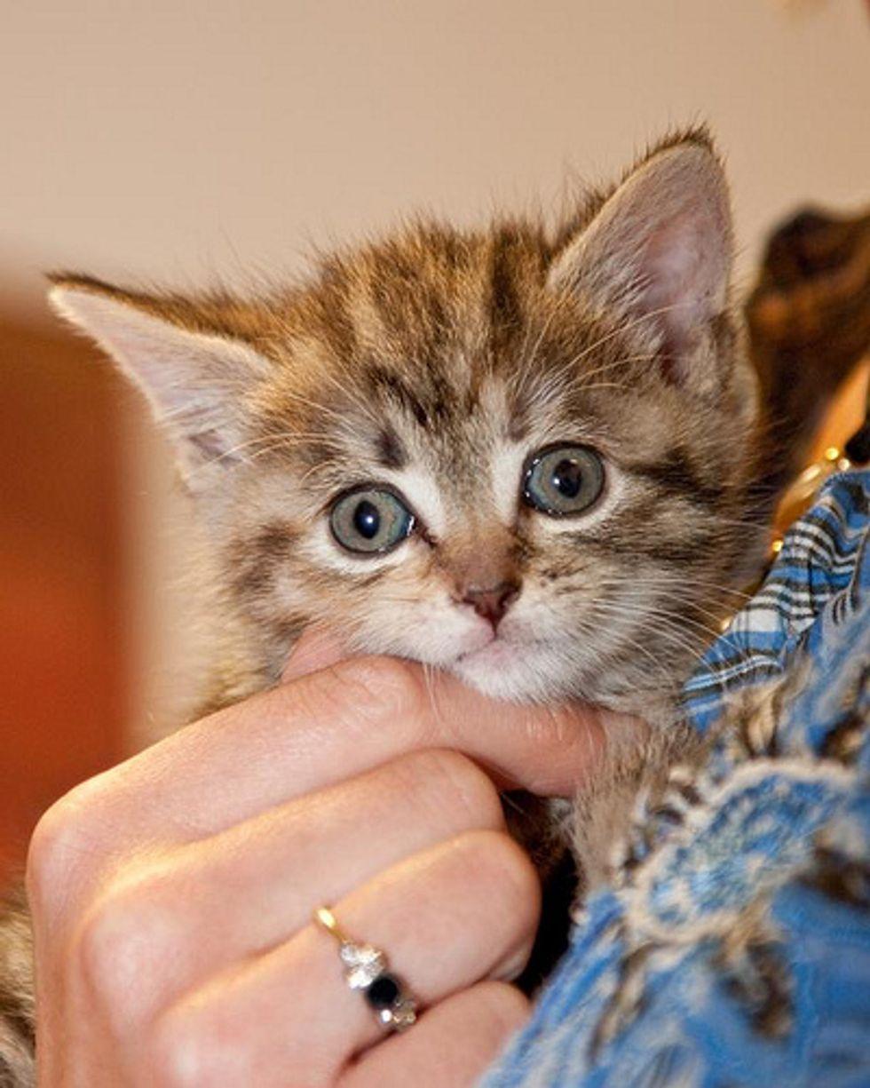 Video: Watering Pot Kitten