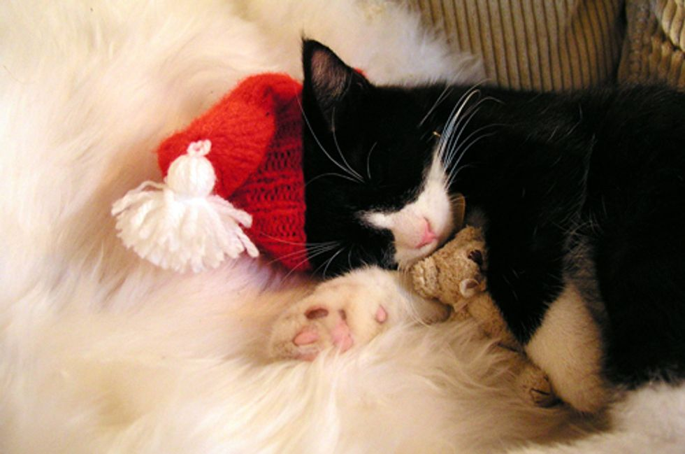Holiday Safety Tips for Cats