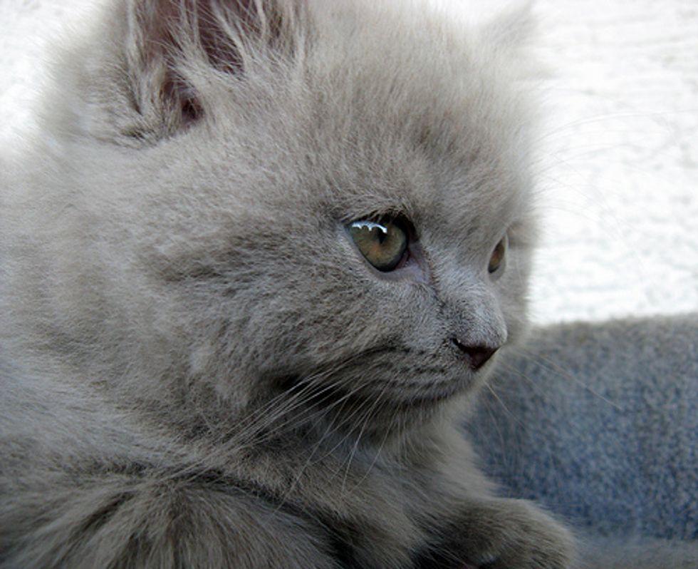Video: Kitten Loves a Tummy Rub