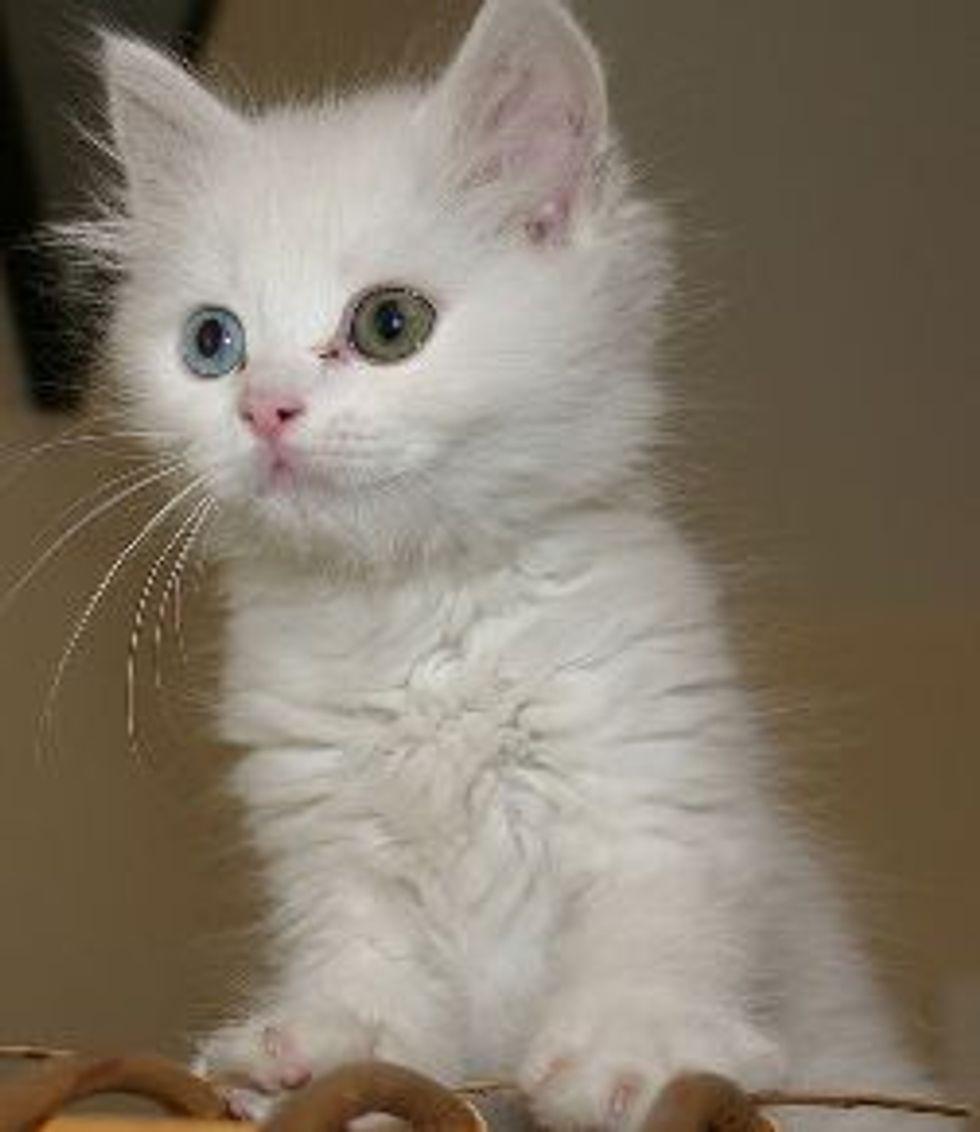 Do Cats Cry Emotional Tears?