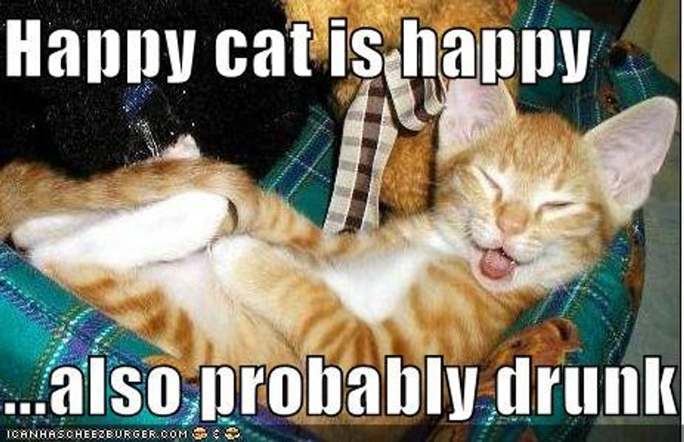 Happy Kittens - Lolcat Fun