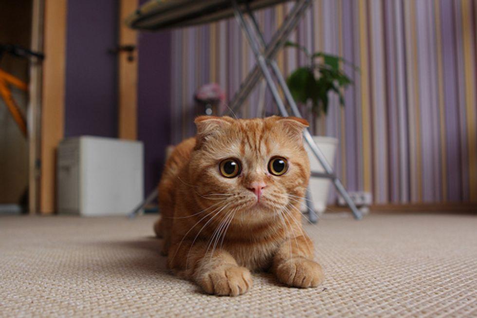 Caturday Kitten Video