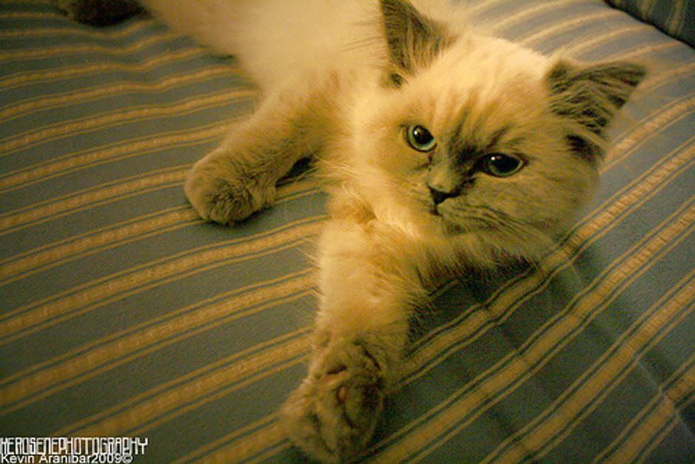 Top Reasons Why Cats Lose Their Homes
