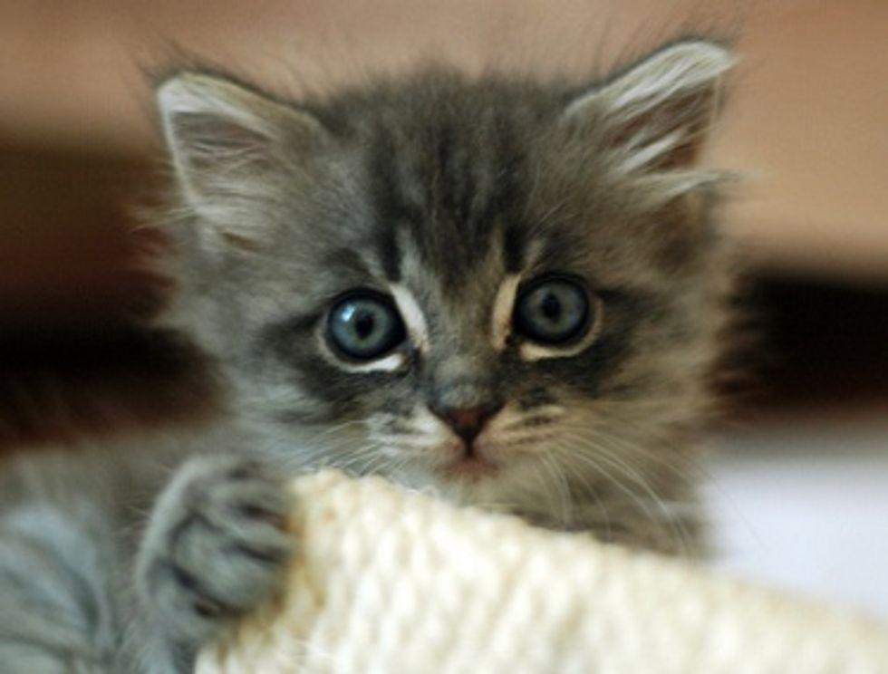 Kittens First Veterinary Exam