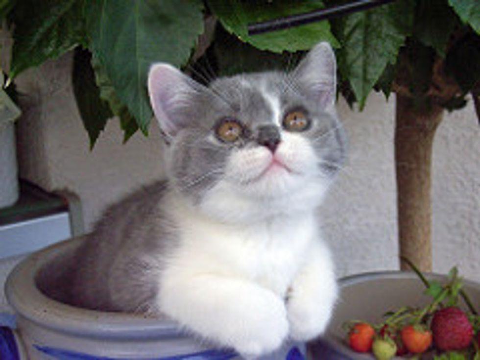 1 Million Lottery Winner Thanks Kittens for It