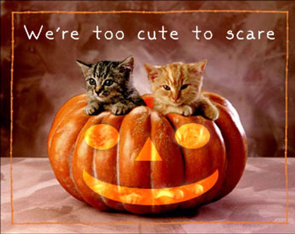 Kitten vs Halloween Bowl Video
