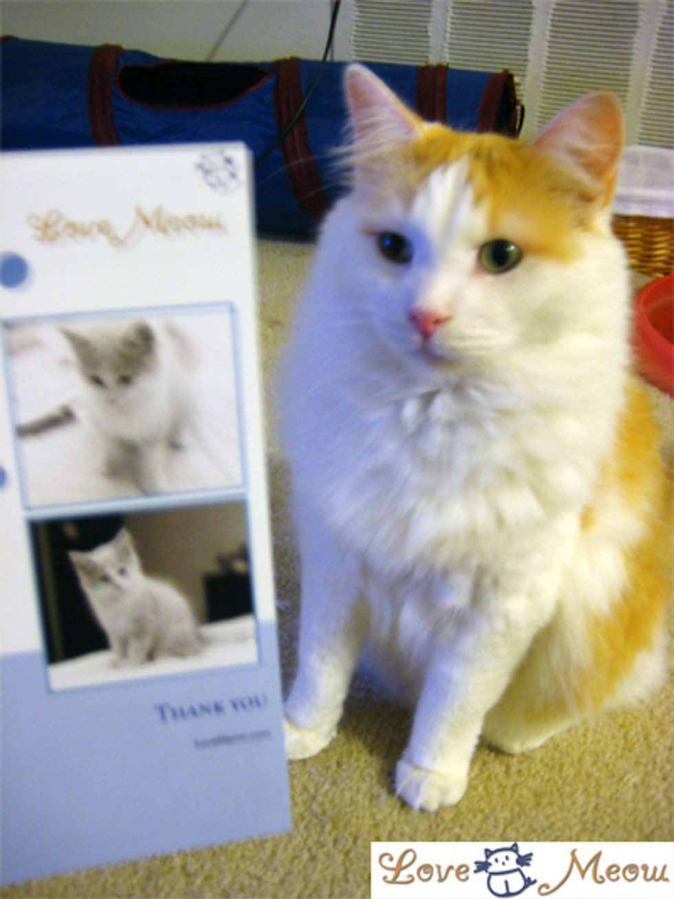 Nominate Love Meow for Best Facebook Fan Page