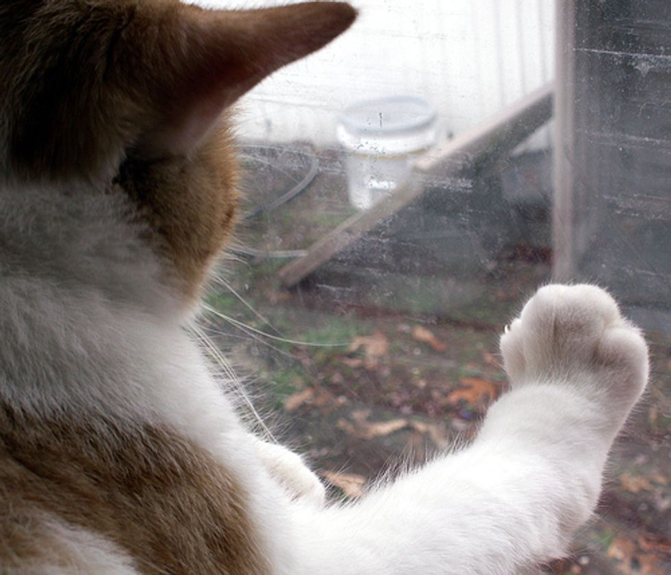 When an Indoor Cat Meets an Outdoor Cat