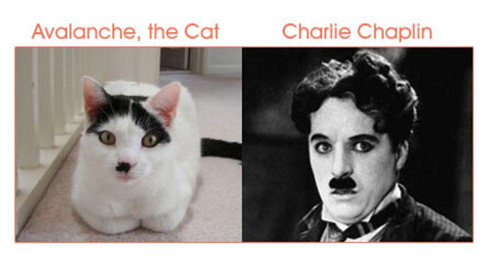 Cat Look Alikes