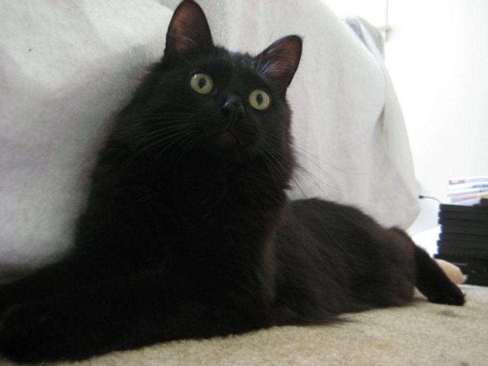 Why I Like Black Cats
