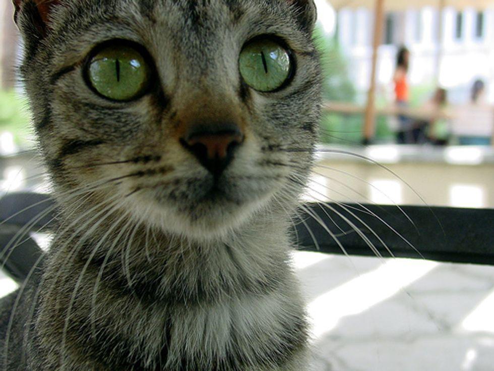 Do Cats Have a Sixth Sense