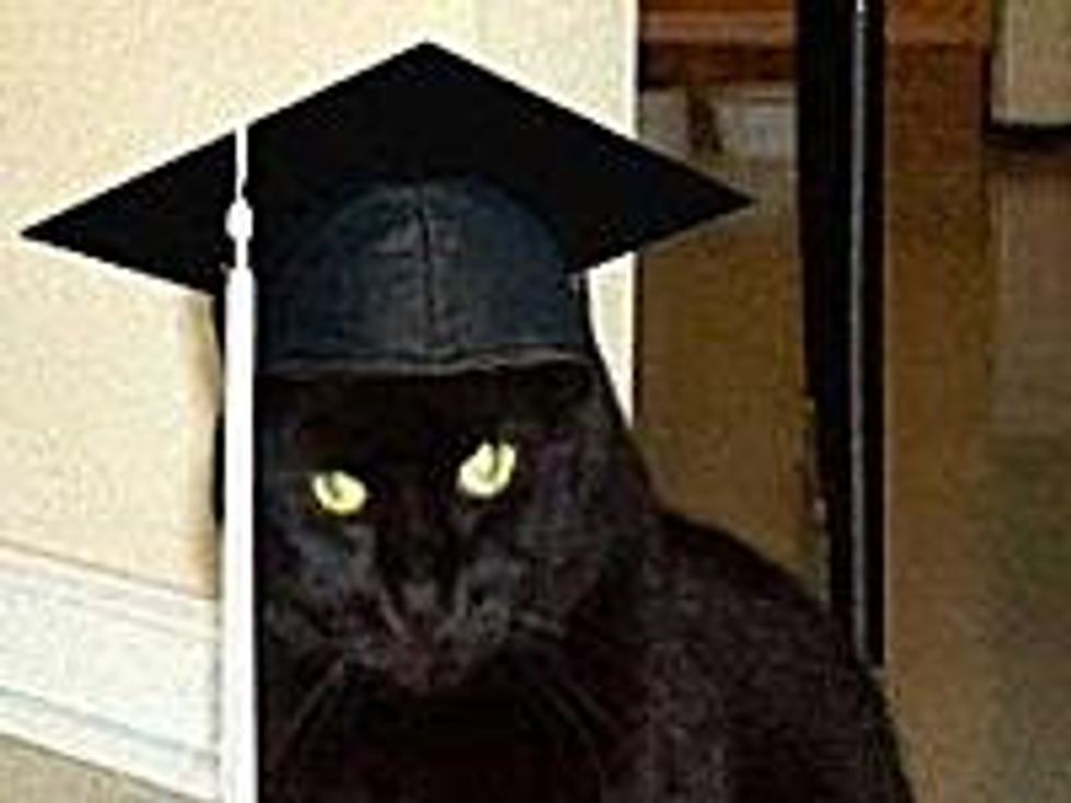 Cats Earned a Diploma or Became a Licensed Professional