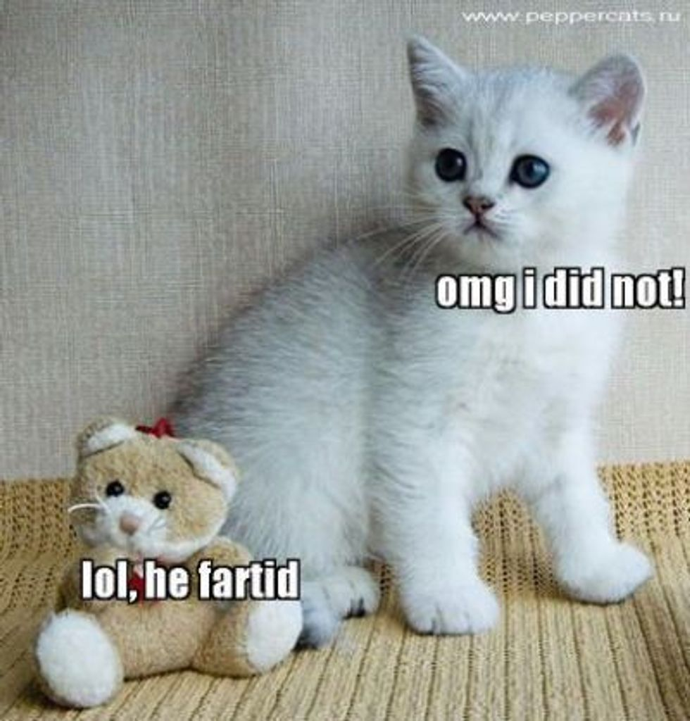 Lolcat Kitten Edition
