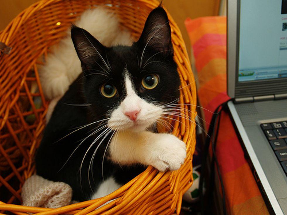 Cute Tuxedo Kittens Videos