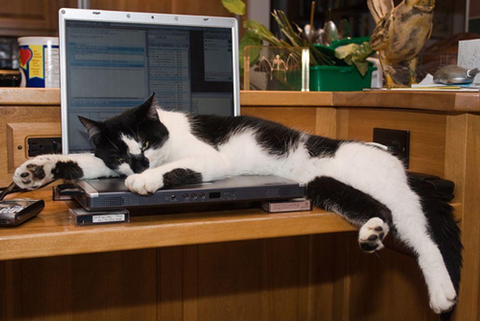 Computer Kittens Videos