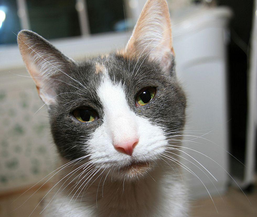 Help! Cat Music Video