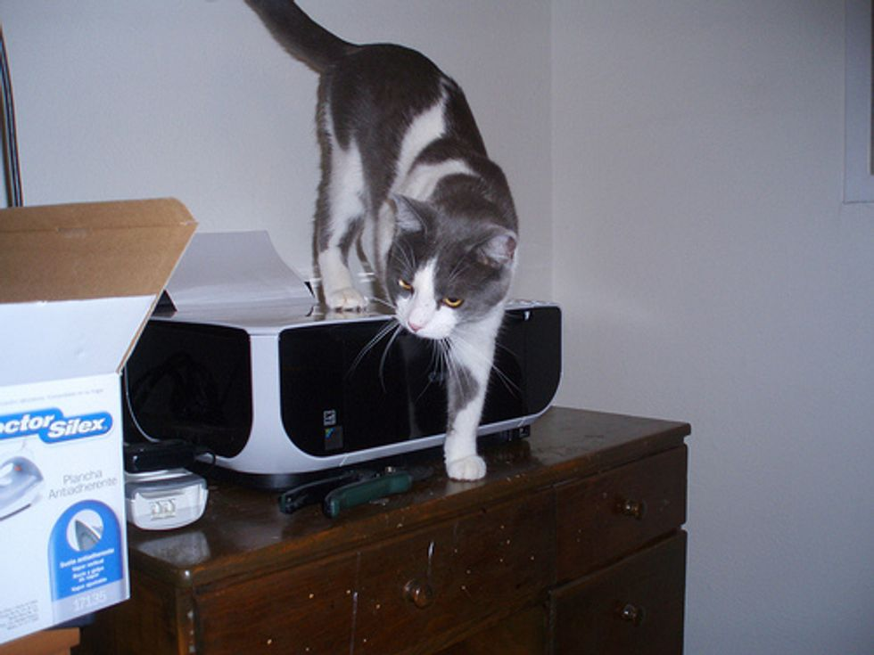 My Cat Attacks Printer and CD Player