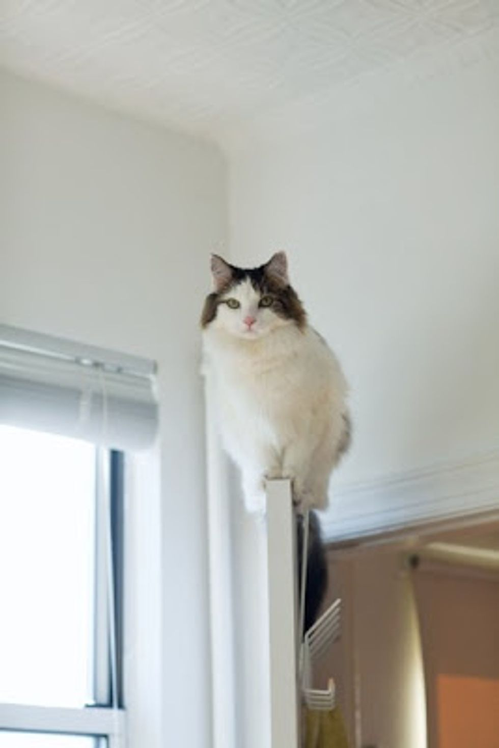 Cat Performs Incredible Feat of Agility