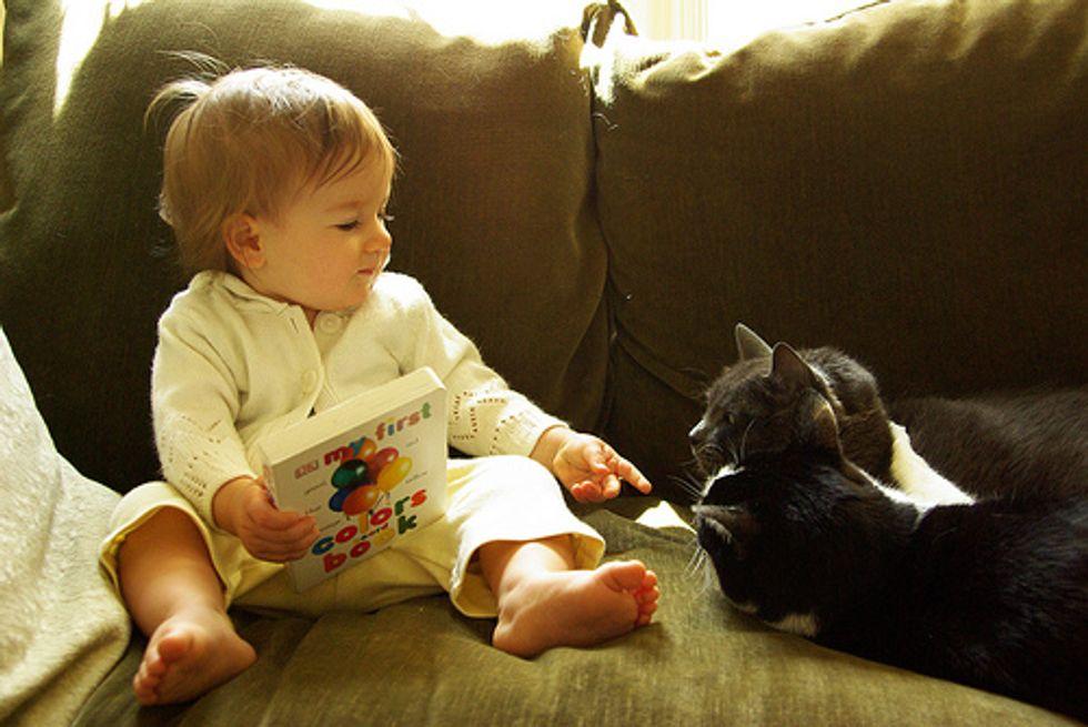 Cats Love Babies Videos