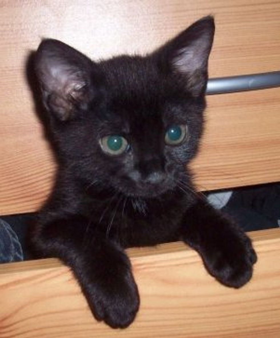 Pet a Black Cat for Good Luck Today