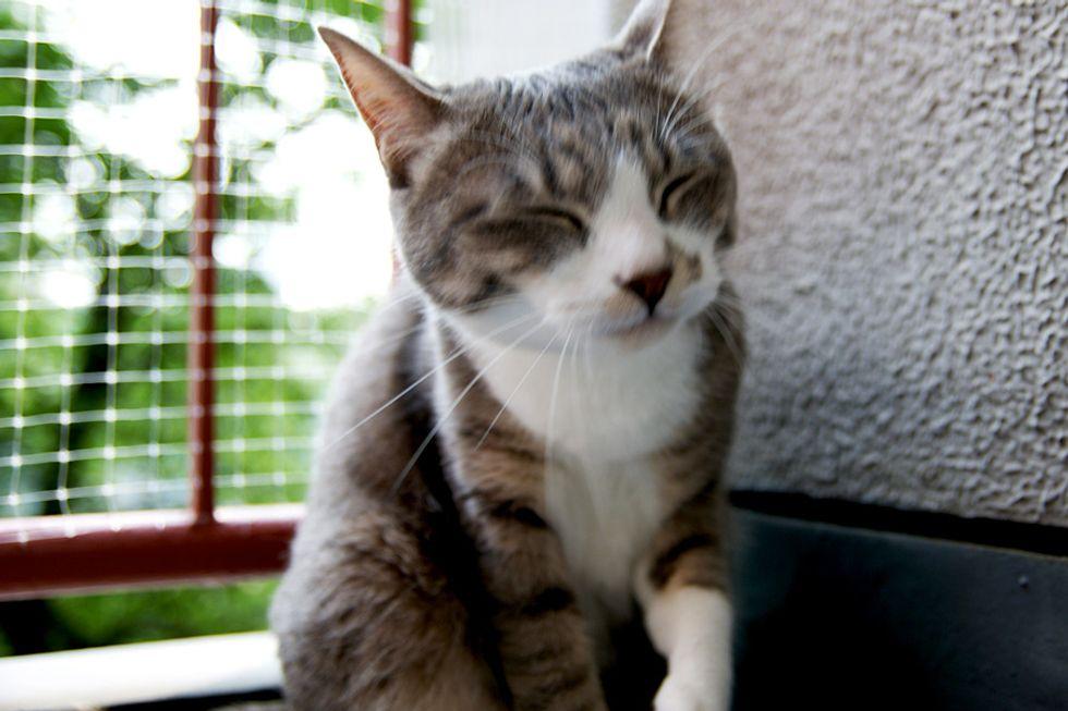 Stalking Kitten Cat Video