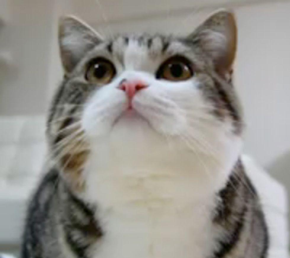 Maru and Recycling Bin Cat Video