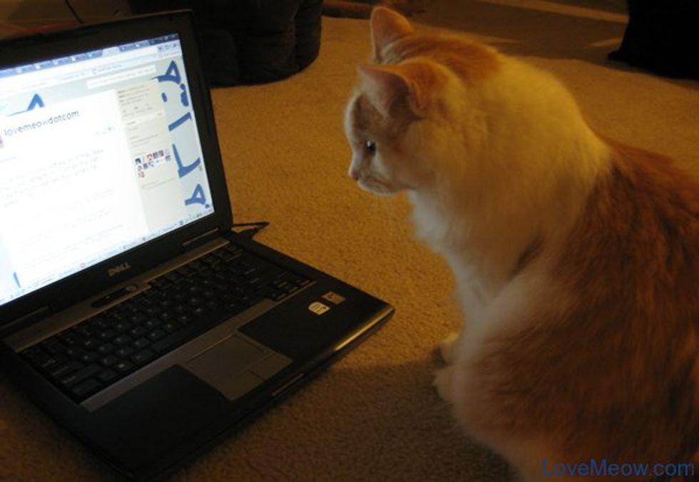 Cats that Tweet