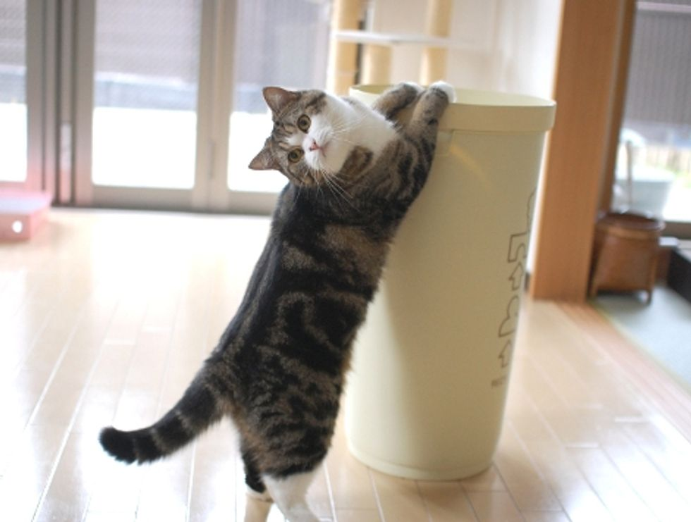 Maru Jumping In and Out Video
