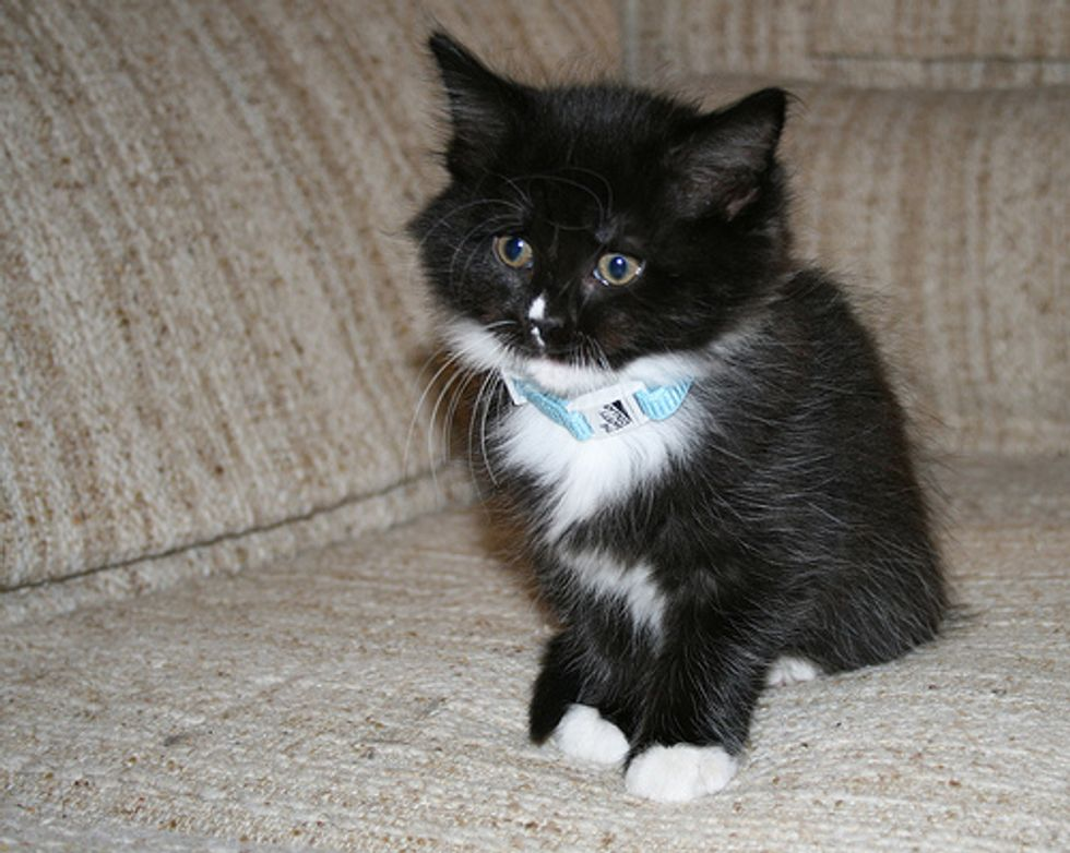 Abused Kitten Saved by Police