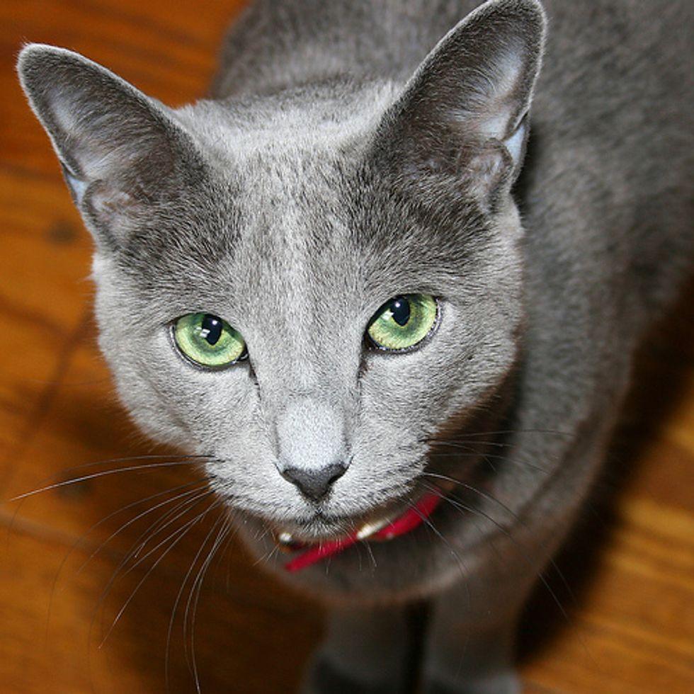 Police Captured Domestic Cat