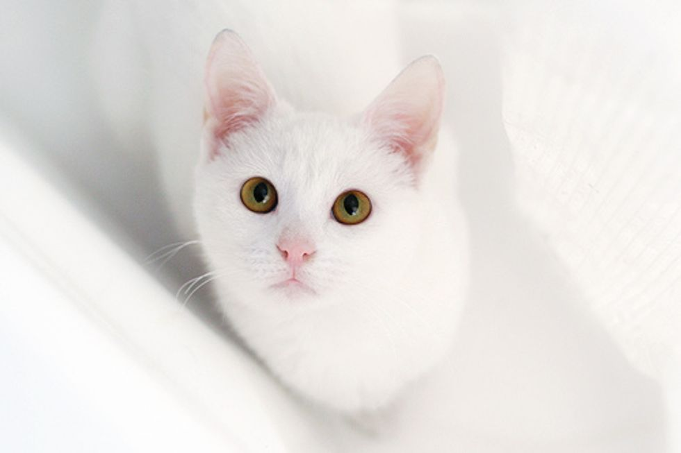Mariah Carey 20 White Kittens Request Denied