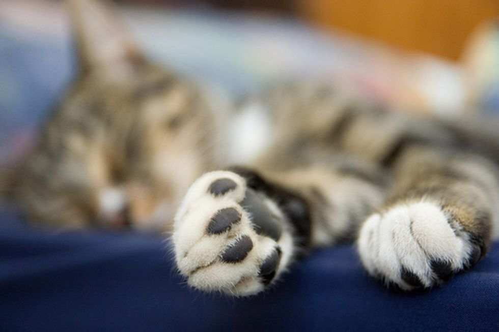 How to Trim a Resistant Cats Nails the Easy Way