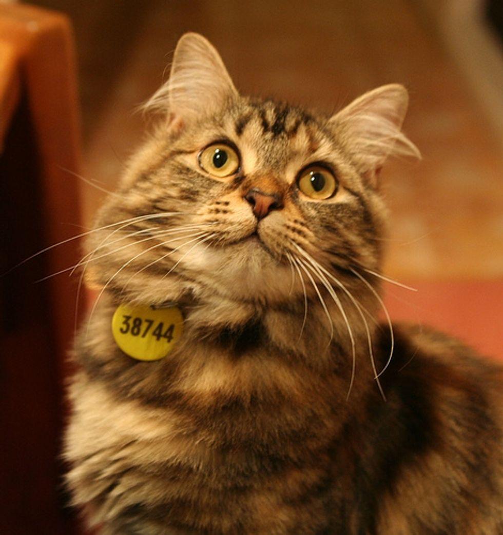 Video: Kitten Defensive Tail