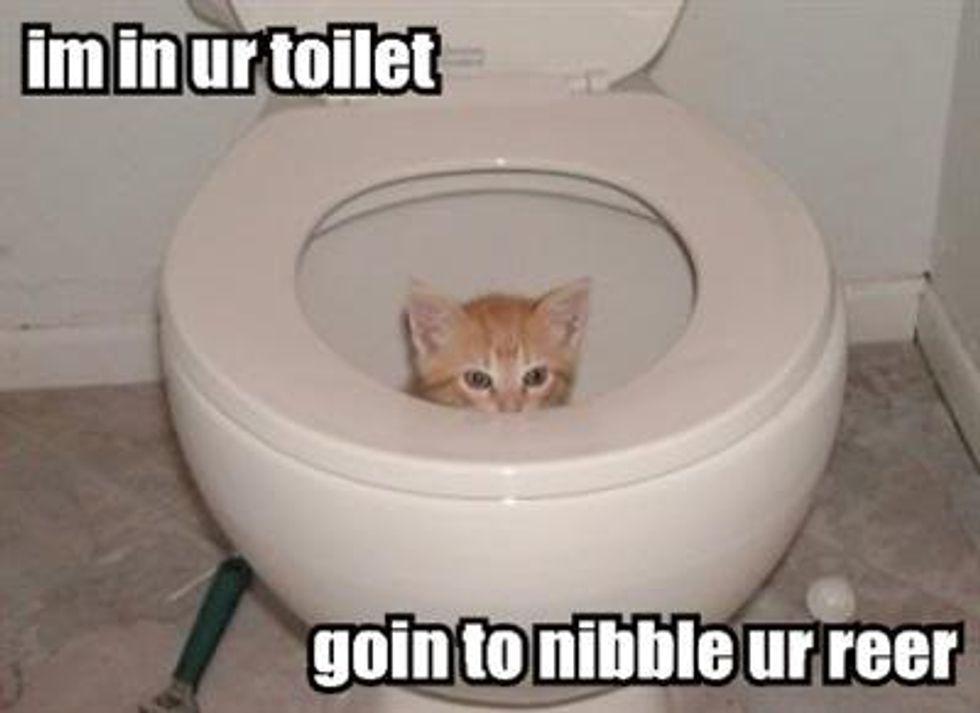 Cheezburger Time Bathroom Kitten Edition
