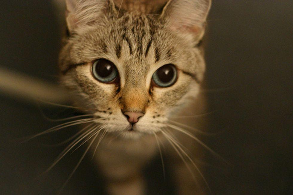 Smart Cat Who Lives Like a Human