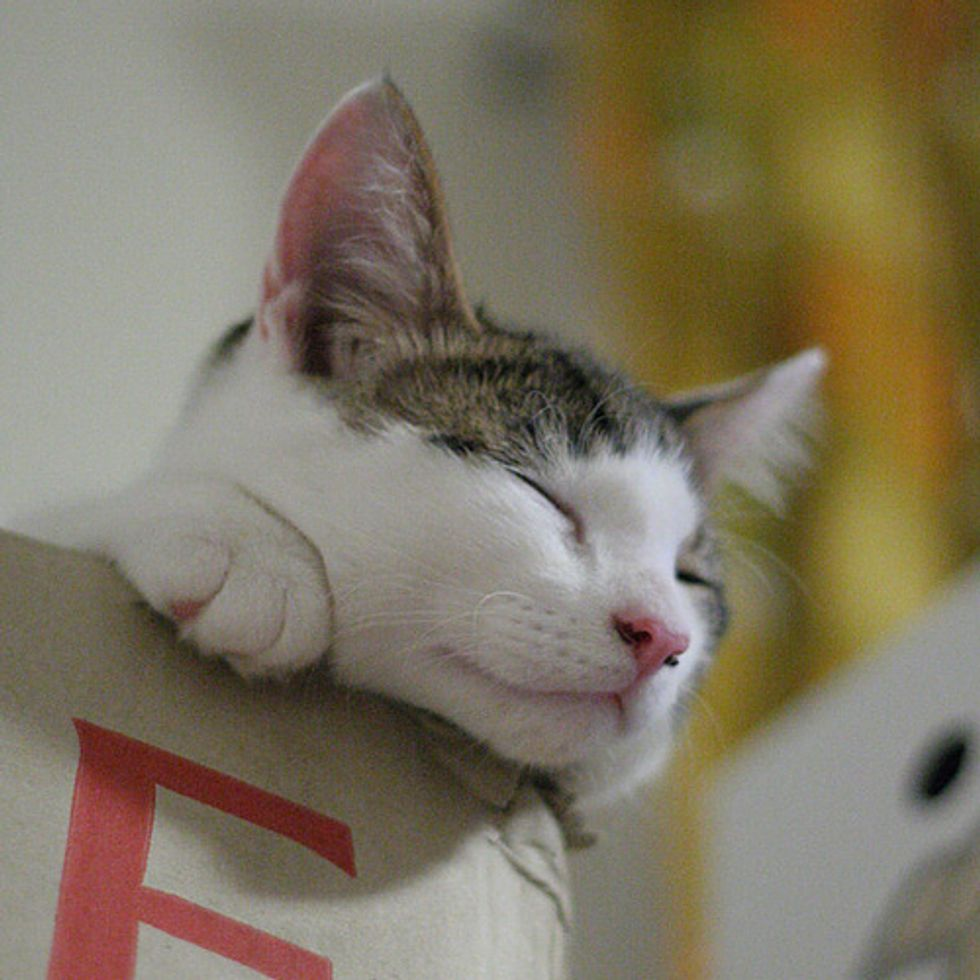 Video Kittens Love Boxes