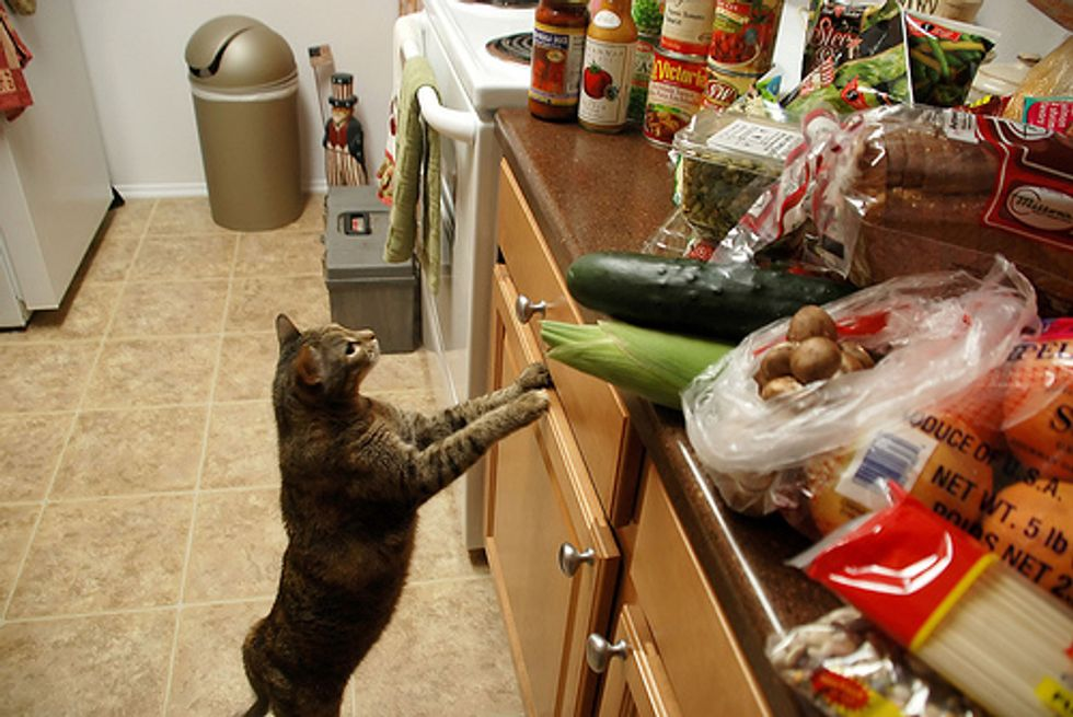 How to Keep My Cat off the Kitchen Counters