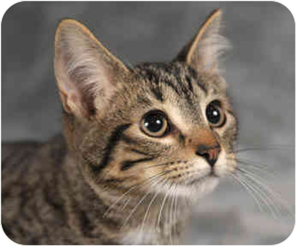 Cats That Looking for a Home to Be Thankful for