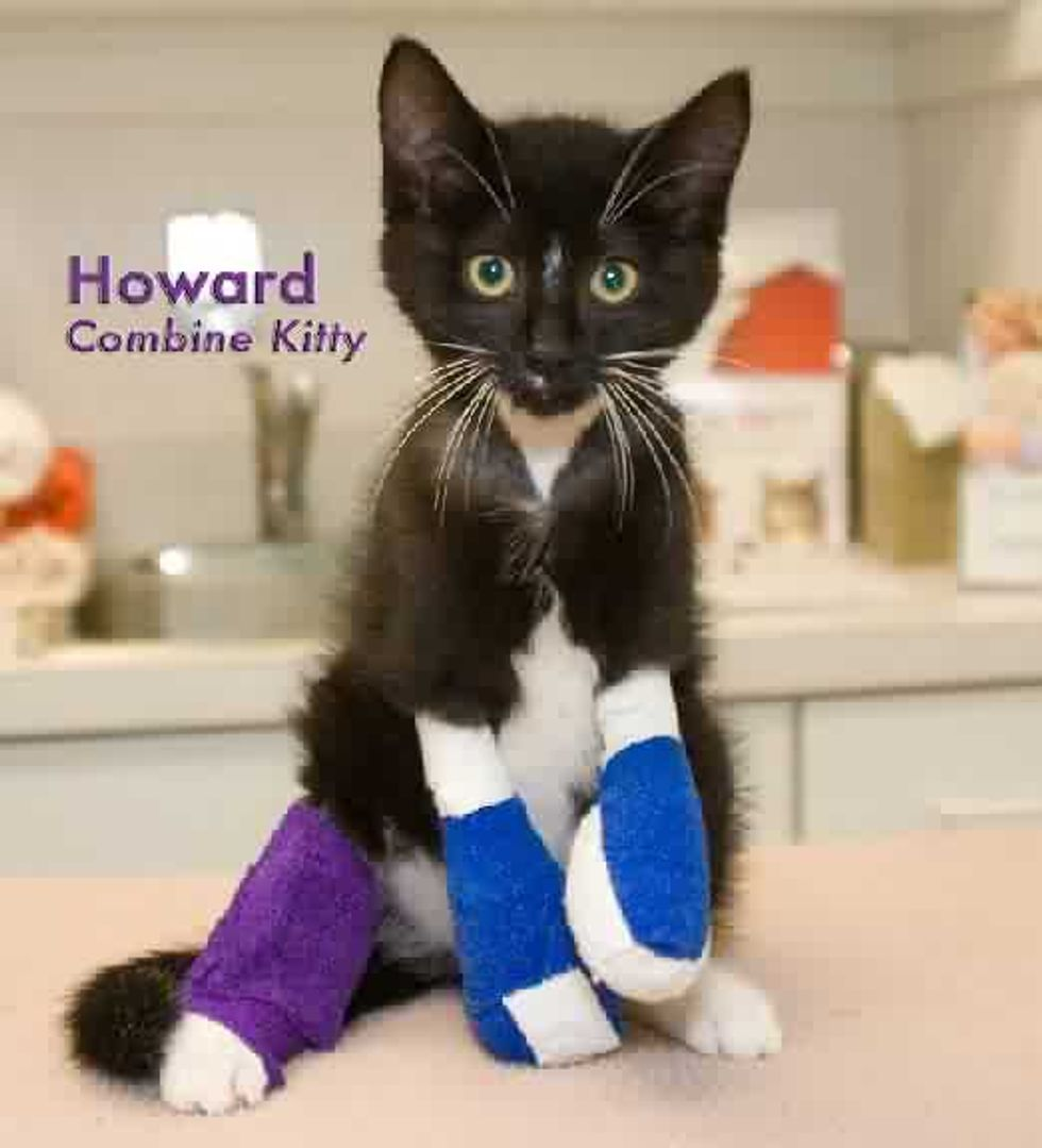 Howard Combine Kitten Lost Front Paws but Gained a New Life