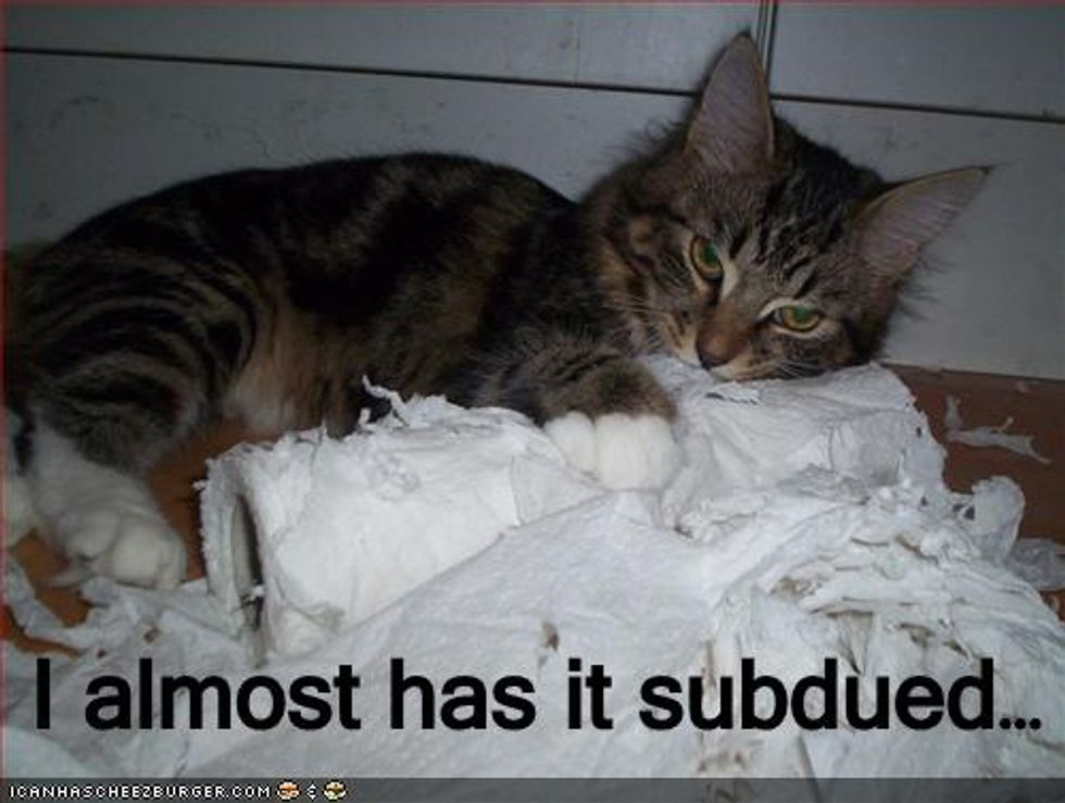 Tissue Terror How to Stop Cats from Shredding Toilet Paper