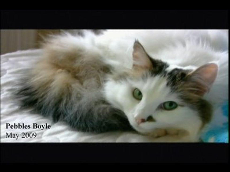 Susan Boyles Most Beloved Pebbles the Cat