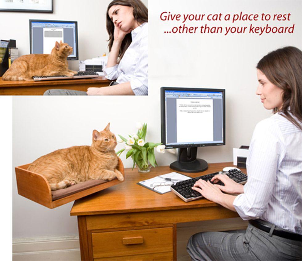 Catmas Giveaway Contest Prize Refined Feline Kitt in Box