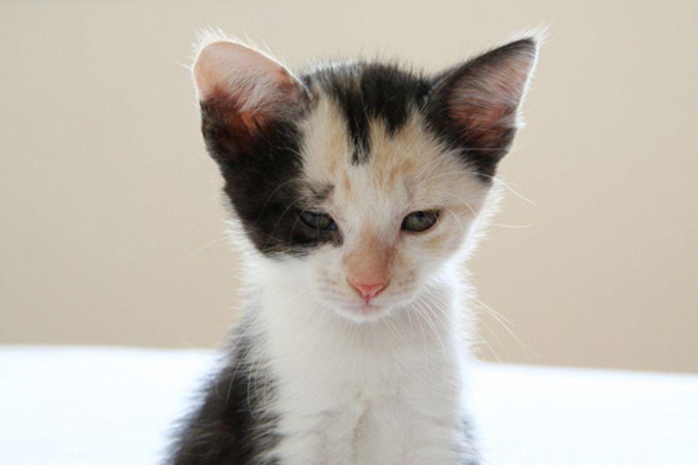 Cat Food Recall Diamond Pet Food