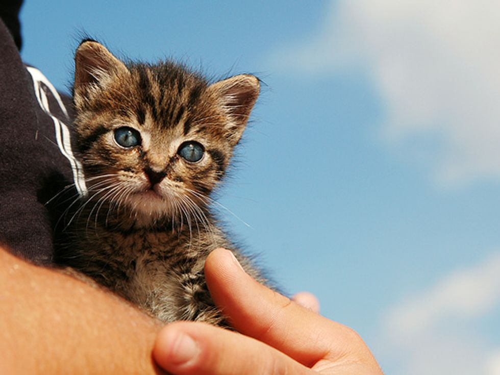 Kitten Rescued from a Running Car on Highway
