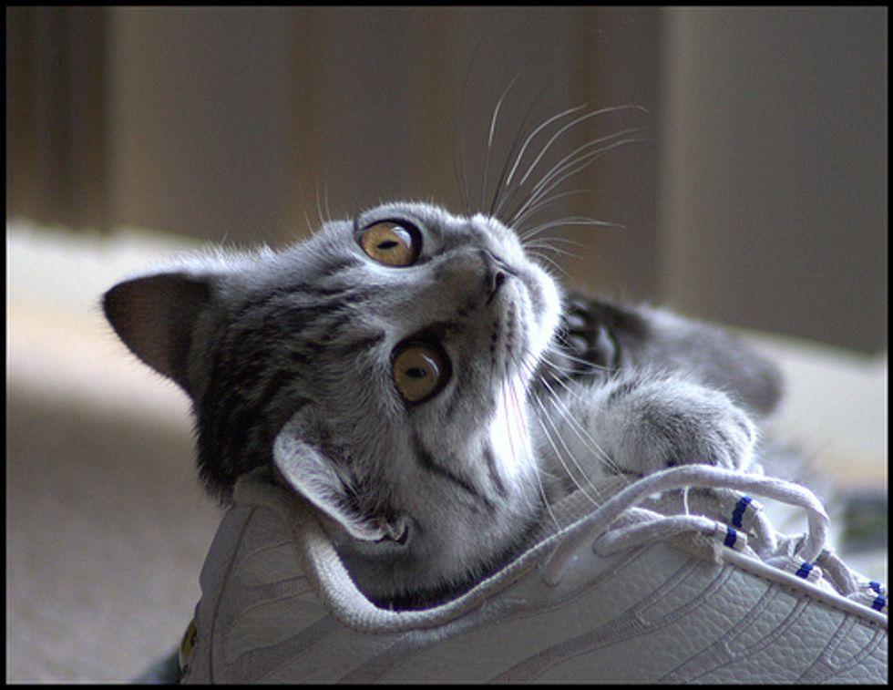 Super Happy Cat Funny Om Nom Nom Kitten