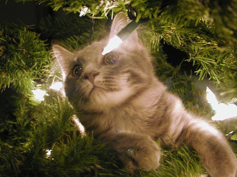Cats Not Really Santas Helpers