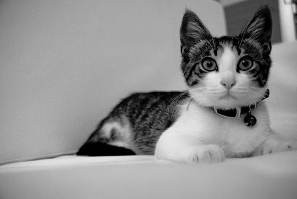 Cat Video Kitten in the Corner