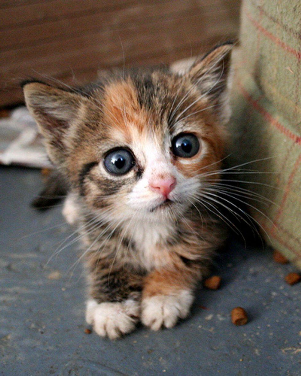 Cuteness Overload Kitten Videos