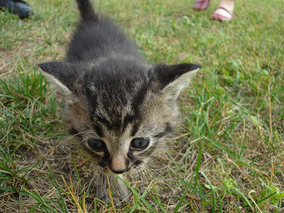 Kitten Survives 120 Mile Trip Beneath SUV